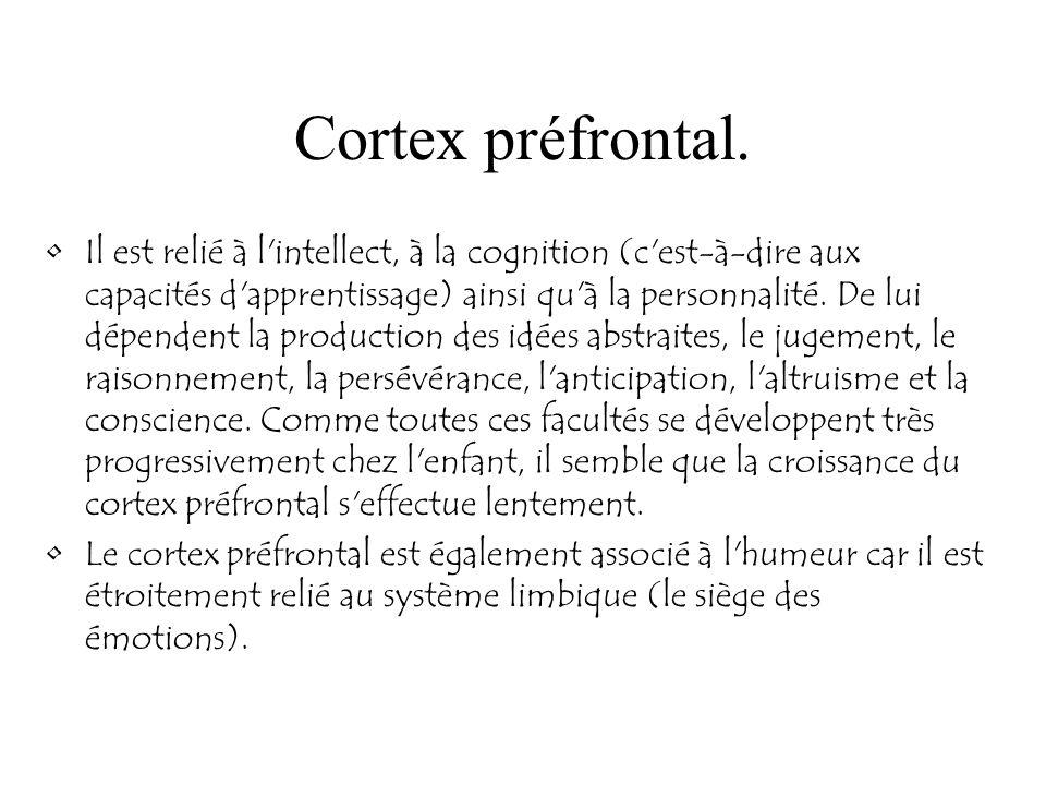 Cortex préfrontal. Il est relié à l'intellect, à la cognition (c'est-à-dire aux capacités d'apprentissage) ainsi qu'à la personnalité. De lui dépenden