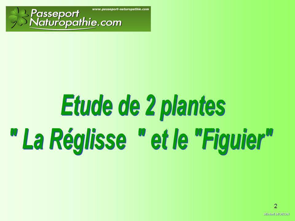 3 Nom latin : Glycyrrhiza glabra Famille des : Fabacées ou légumineuses Synonyme : Bois doux, herbe des tanneurs Du Grec : glycys ( doux, sucré ) et rhidza ( racine )