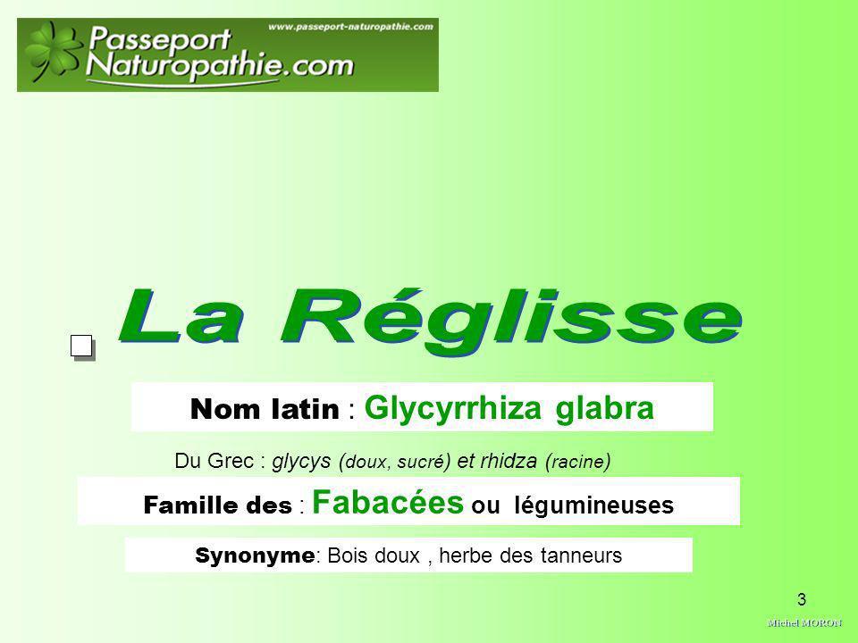 3 Nom latin : Glycyrrhiza glabra Famille des : Fabacées ou légumineuses Synonyme : Bois doux, herbe des tanneurs Du Grec : glycys ( doux, sucré ) et r