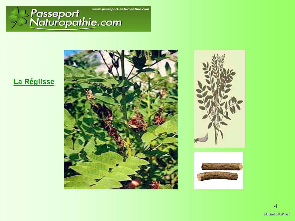 25 le figuier est un arbre fruitier à végétation vivace, à feuilles caduques de 2 à 5 mètres de hauteur, à fruits en forme de poire qui acquièrent en mûrissant une couleur brun pourpre.