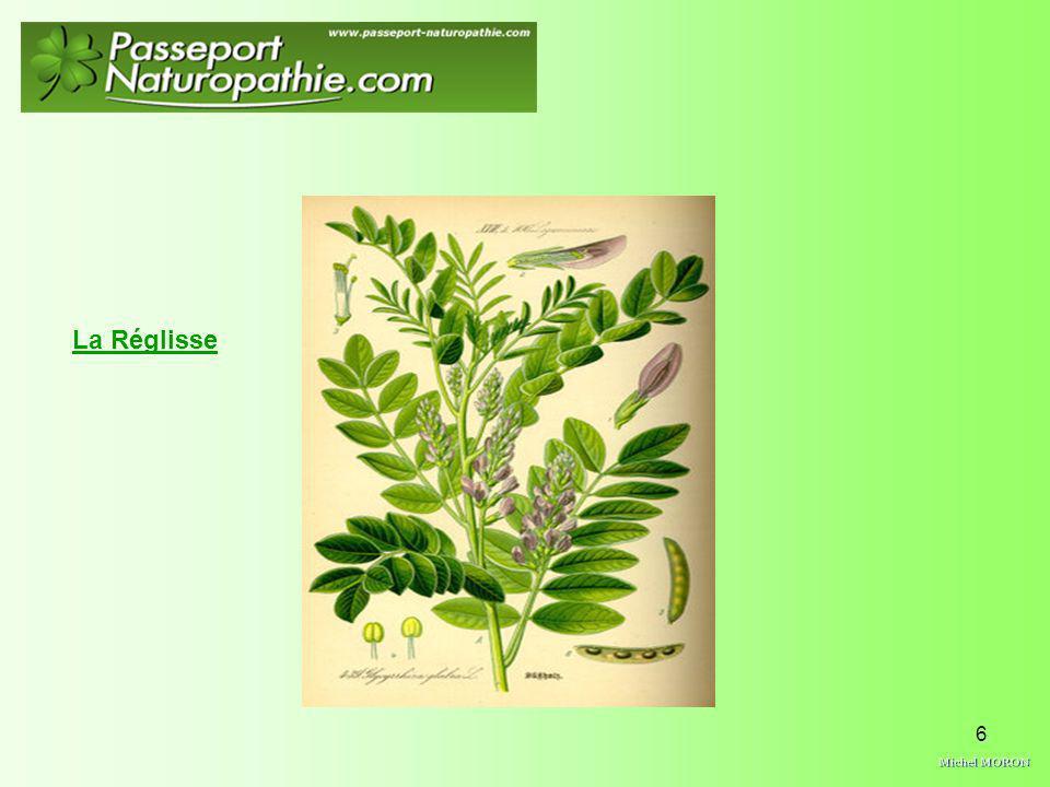 7 Depuis bien longtemps lhomme utilise la réglisse en tant qualiment mais également comme médicament.