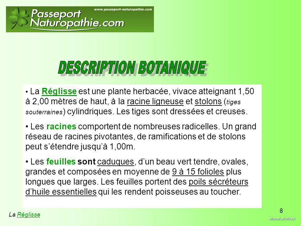 8 La Réglisse est une plante herbacée, vivace atteignant 1,50 à 2,00 mètres de haut, à la racine ligneuse et stolons ( tiges souterraines ) cylindriqu