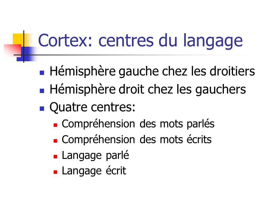 Cortex: centres du langage Hémisphère gauche chez les droitiers Hémisphère droit chez les gauchers Quatre centres: Compréhension des mots parlés Compréhension des mots écrits Langage parlé Langage écrit