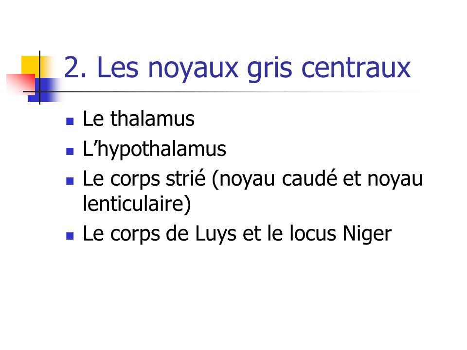 2. Les noyaux gris centraux Le thalamus Lhypothalamus Le corps strié (noyau caudé et noyau lenticulaire) Le corps de Luys et le locus Niger
