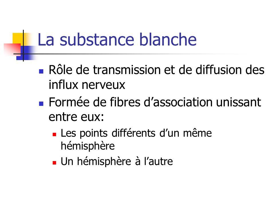 La substance blanche Rôle de transmission et de diffusion des influx nerveux Formée de fibres dassociation unissant entre eux: Les points différents dun même hémisphère Un hémisphère à lautre
