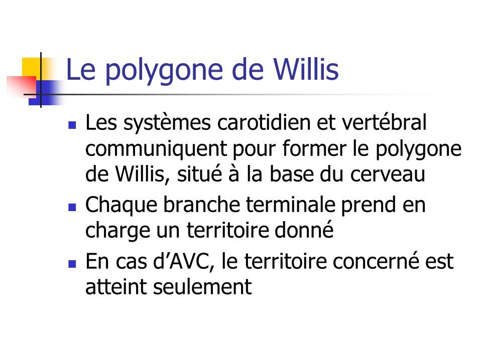 Le polygone de Willis Les systèmes carotidien et vertébral communiquent pour former le polygone de Willis, situé à la base du cerveau Chaque branche terminale prend en charge un territoire donné En cas dAVC, le territoire concerné est atteint seulement