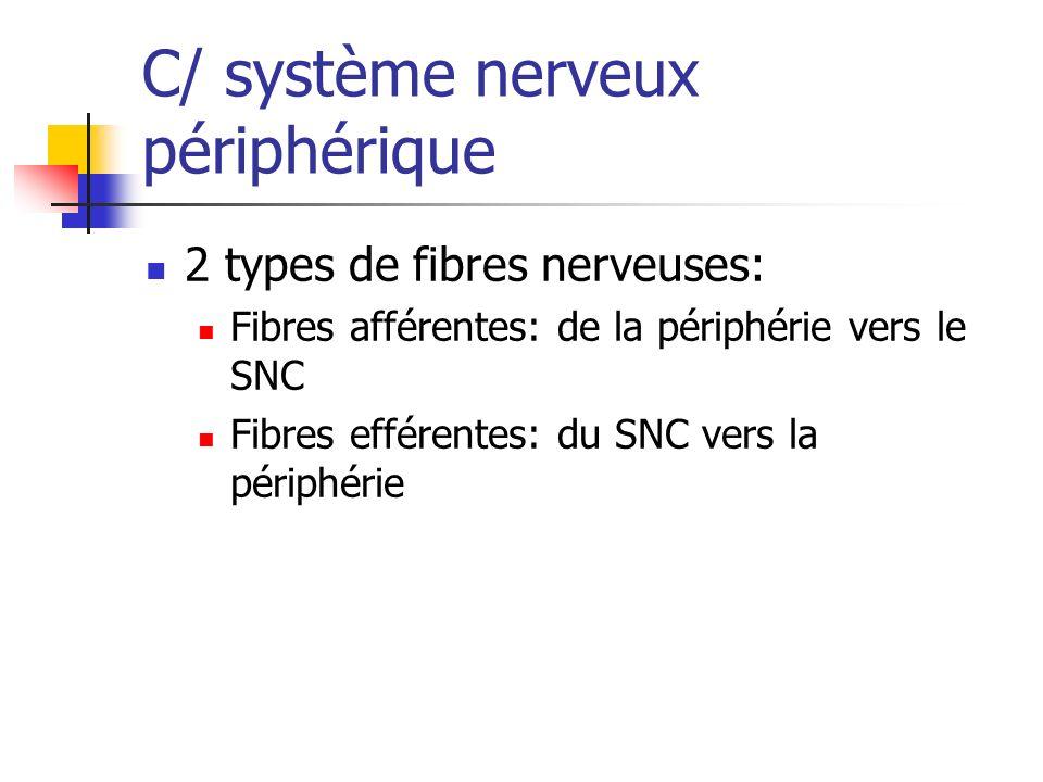 C/ système nerveux périphérique 2 types de fibres nerveuses: Fibres afférentes: de la périphérie vers le SNC Fibres efférentes: du SNC vers la périphérie