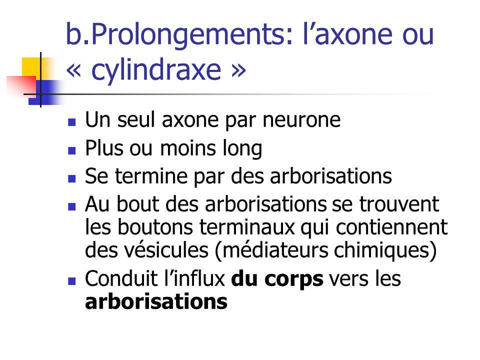 b.Prolongements: laxone ou « cylindraxe » Un seul axone par neurone Plus ou moins long Se termine par des arborisations Au bout des arborisations se trouvent les boutons terminaux qui contiennent des vésicules (médiateurs chimiques) Conduit linflux du corps vers les arborisations