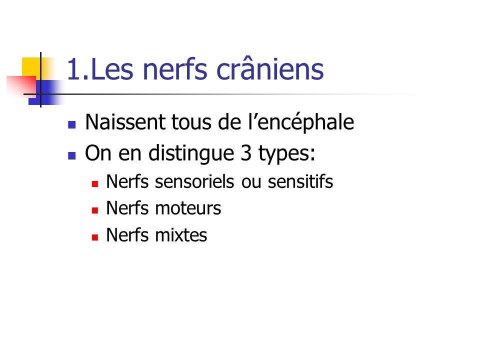 1.Les nerfs crâniens Naissent tous de lencéphale On en distingue 3 types: Nerfs sensoriels ou sensitifs Nerfs moteurs Nerfs mixtes
