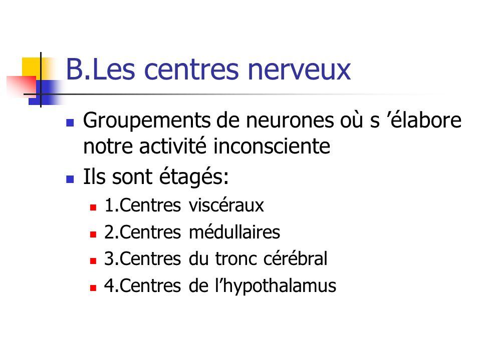 B.Les centres nerveux Groupements de neurones où s élabore notre activité inconsciente Ils sont étagés: 1.Centres viscéraux 2.Centres médullaires 3.Centres du tronc cérébral 4.Centres de lhypothalamus