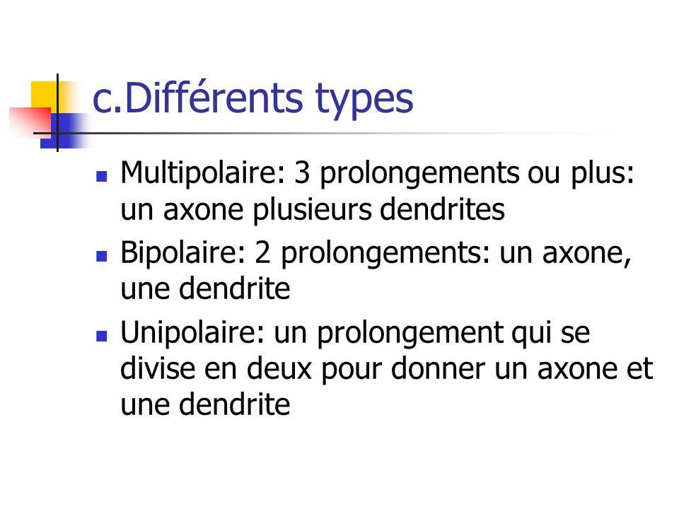 c.Différents types Multipolaire: 3 prolongements ou plus: un axone plusieurs dendrites Bipolaire: 2 prolongements: un axone, une dendrite Unipolaire: un prolongement qui se divise en deux pour donner un axone et une dendrite