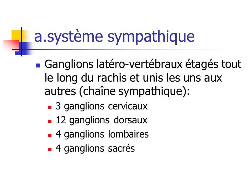 a.système sympathique Ganglions latéro-vertébraux étagés tout le long du rachis et unis les uns aux autres (chaîne sympathique): 3 ganglions cervicaux 12 ganglions dorsaux 4 ganglions lombaires 4 ganglions sacrés