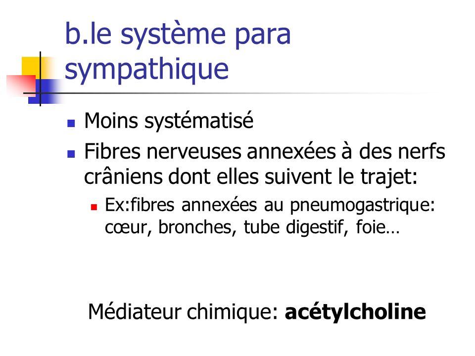 b.le système para sympathique Moins systématisé Fibres nerveuses annexées à des nerfs crâniens dont elles suivent le trajet: Ex:fibres annexées au pneumogastrique: cœur, bronches, tube digestif, foie… Médiateur chimique: acétylcholine