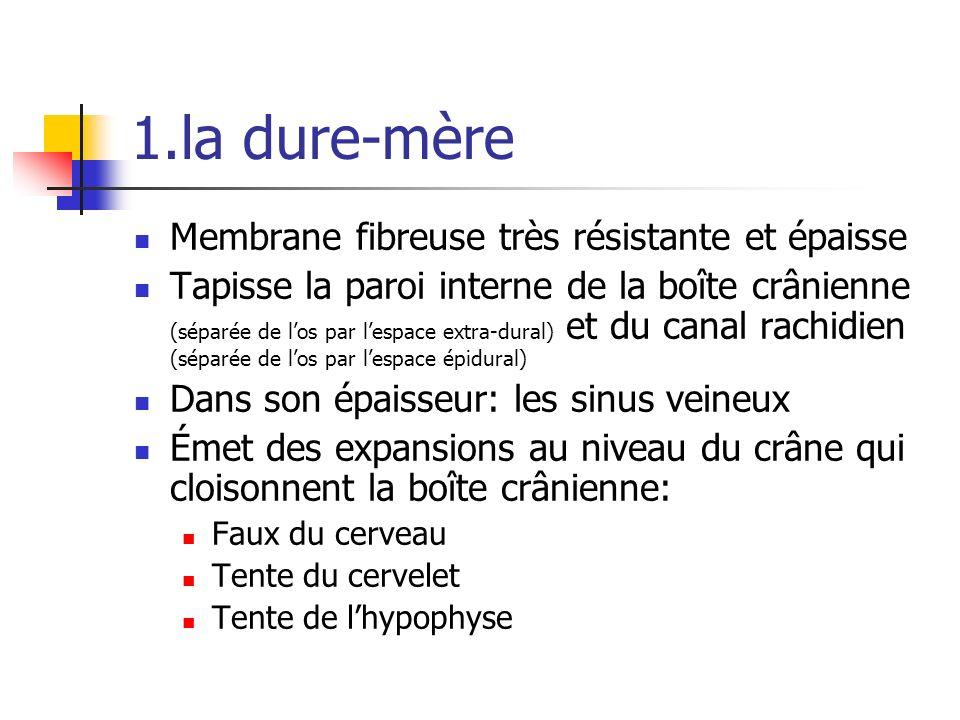 1.la dure-mère Membrane fibreuse très résistante et épaisse Tapisse la paroi interne de la boîte crânienne (séparée de los par lespace extra-dural) et du canal rachidien (séparée de los par lespace épidural) Dans son épaisseur: les sinus veineux Émet des expansions au niveau du crâne qui cloisonnent la boîte crânienne: Faux du cerveau Tente du cervelet Tente de lhypophyse