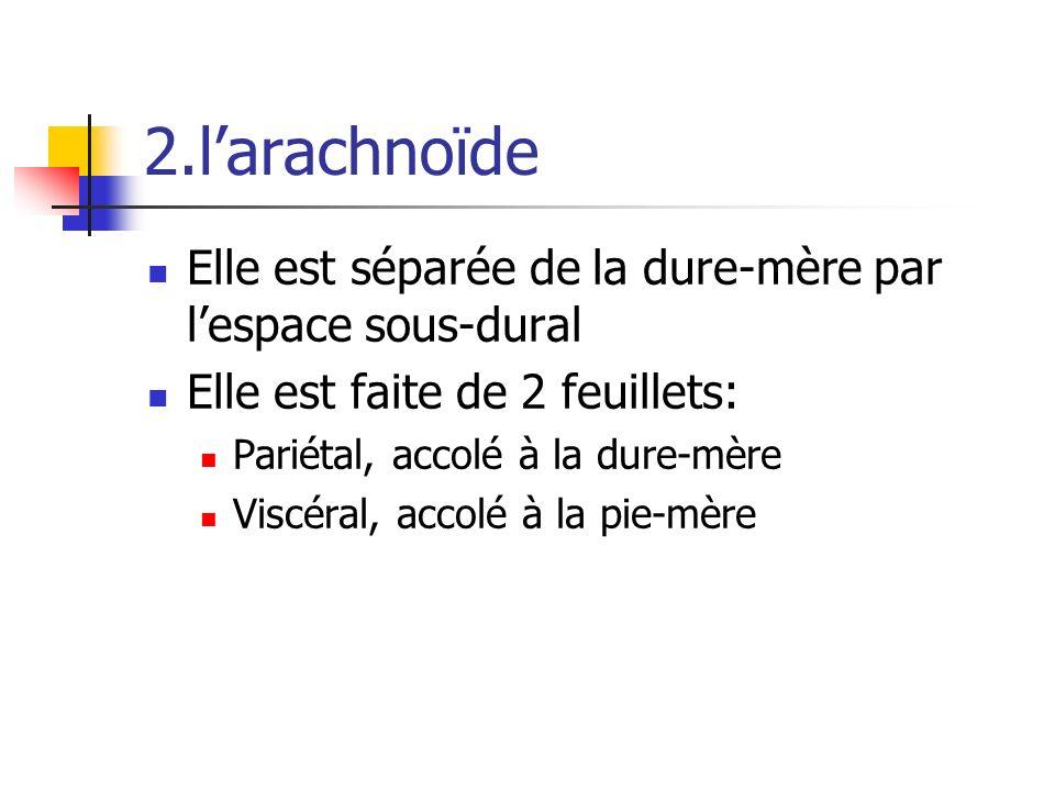 2.larachnoïde Elle est séparée de la dure-mère par lespace sous-dural Elle est faite de 2 feuillets: Pariétal, accolé à la dure-mère Viscéral, accolé à la pie-mère