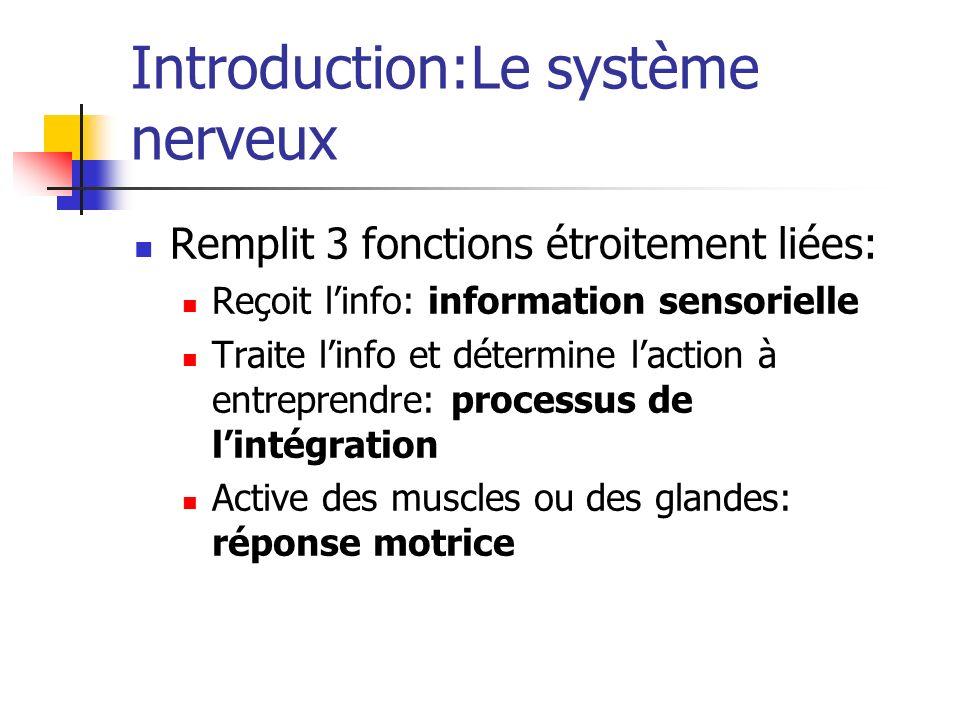 Introduction:Le système nerveux Remplit 3 fonctions étroitement liées: Reçoit linfo: information sensorielle Traite linfo et détermine laction à entreprendre: processus de lintégration Active des muscles ou des glandes: réponse motrice