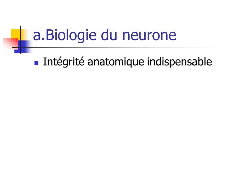 a.Biologie du neurone Intégrité anatomique indispensable