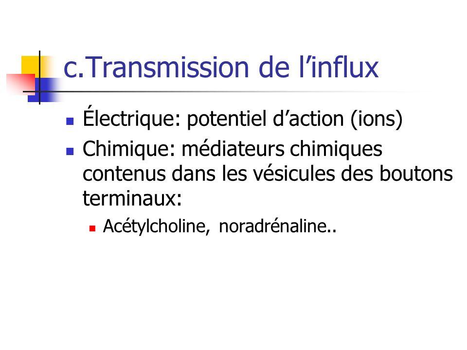 c.Transmission de linflux Électrique: potentiel daction (ions) Chimique: médiateurs chimiques contenus dans les vésicules des boutons terminaux: Acétylcholine, noradrénaline..