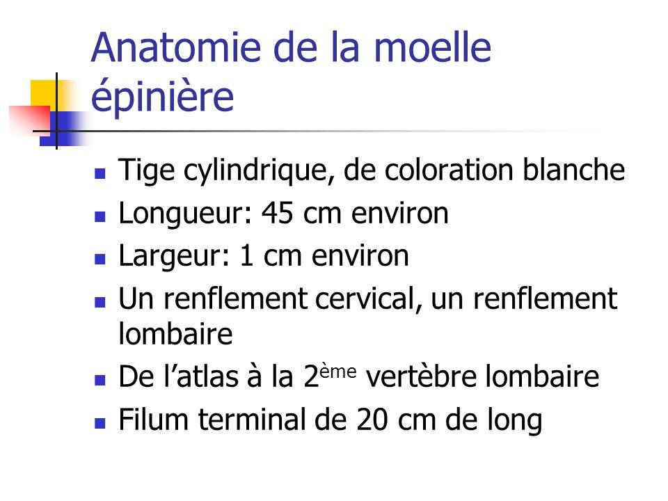 Anatomie de la moelle épinière Tige cylindrique, de coloration blanche Longueur: 45 cm environ Largeur: 1 cm environ Un renflement cervical, un renflement lombaire De latlas à la 2 ème vertèbre lombaire Filum terminal de 20 cm de long