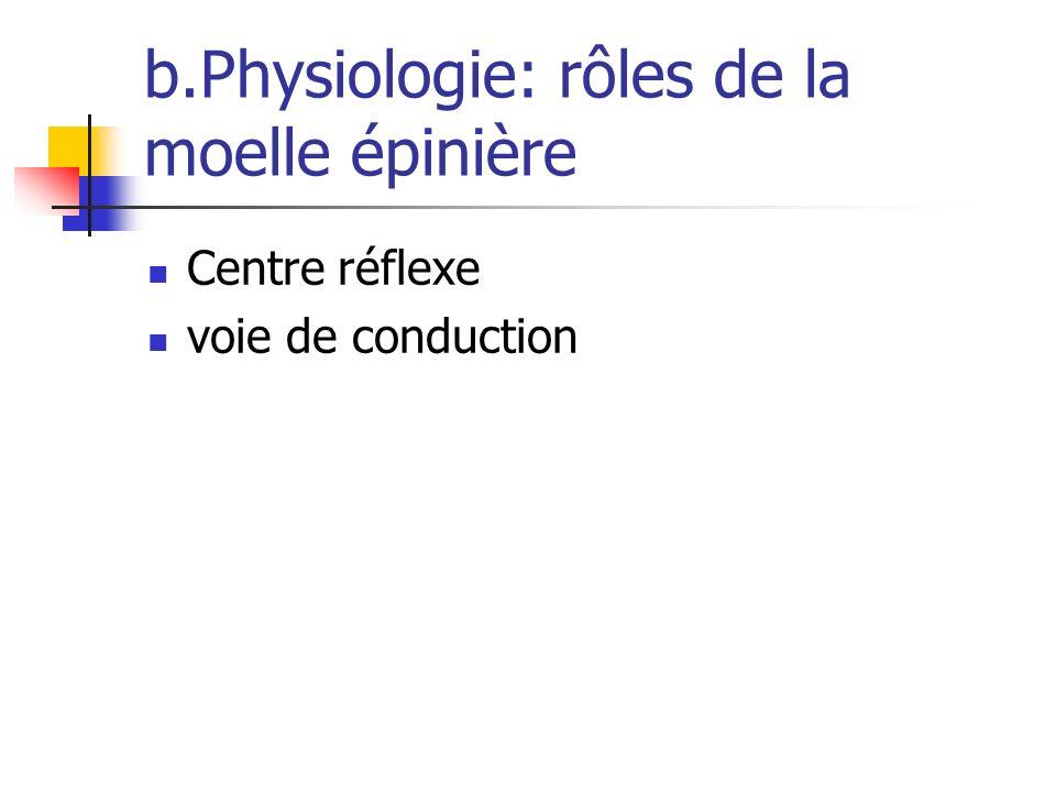 b.Physiologie: rôles de la moelle épinière Centre réflexe voie de conduction