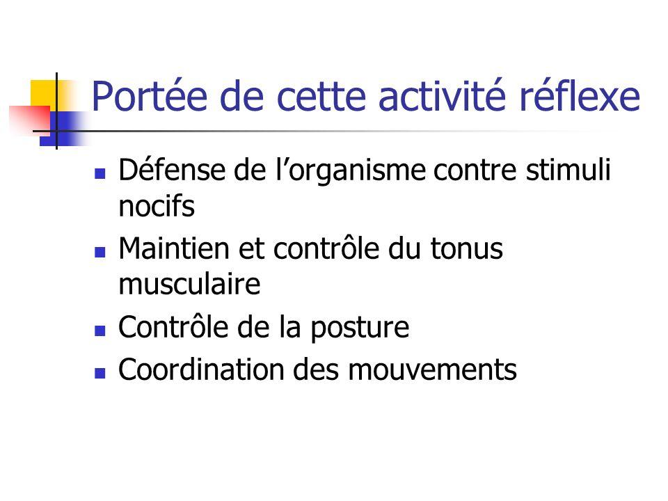 Portée de cette activité réflexe Défense de lorganisme contre stimuli nocifs Maintien et contrôle du tonus musculaire Contrôle de la posture Coordination des mouvements
