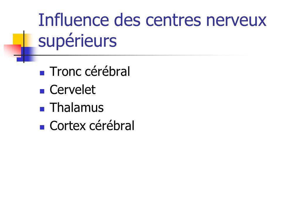 Influence des centres nerveux supérieurs Tronc cérébral Cervelet Thalamus Cortex cérébral