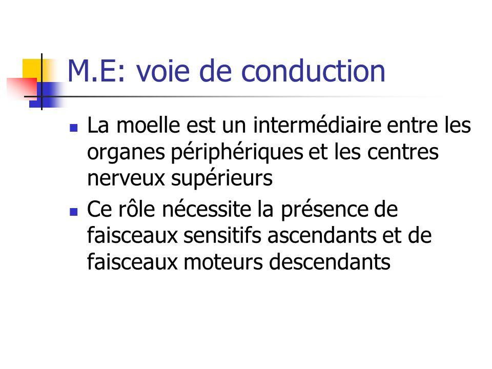 M.E: voie de conduction La moelle est un intermédiaire entre les organes périphériques et les centres nerveux supérieurs Ce rôle nécessite la présence de faisceaux sensitifs ascendants et de faisceaux moteurs descendants
