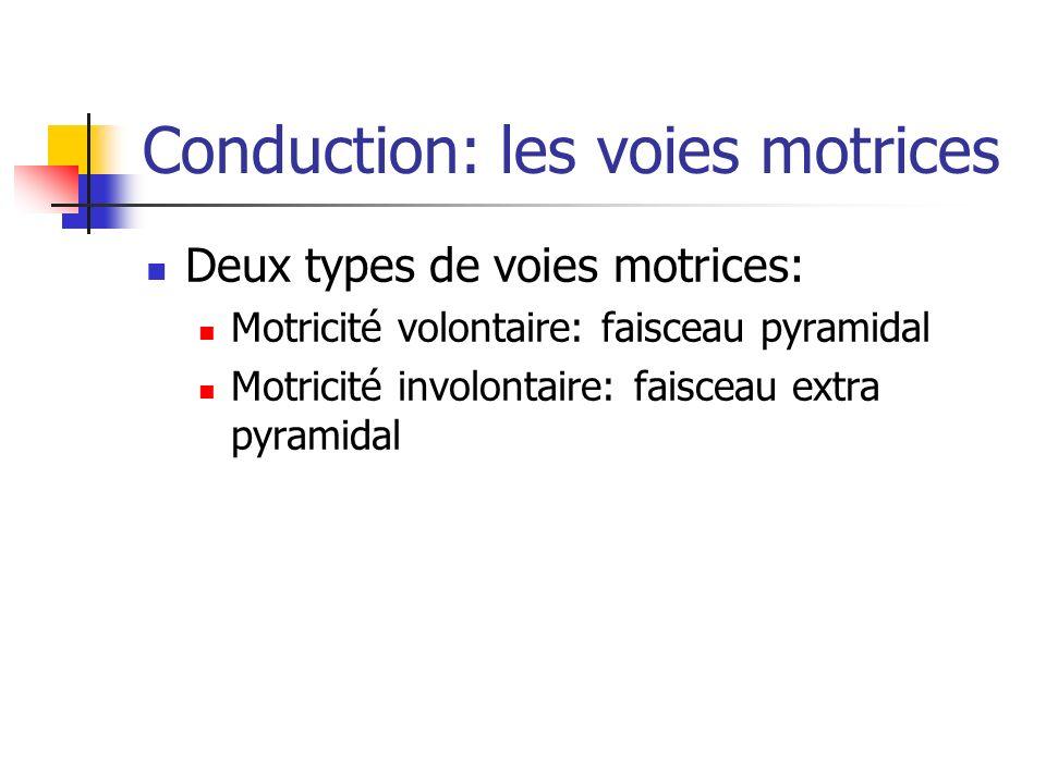 Conduction: les voies motrices Deux types de voies motrices: Motricité volontaire: faisceau pyramidal Motricité involontaire: faisceau extra pyramidal