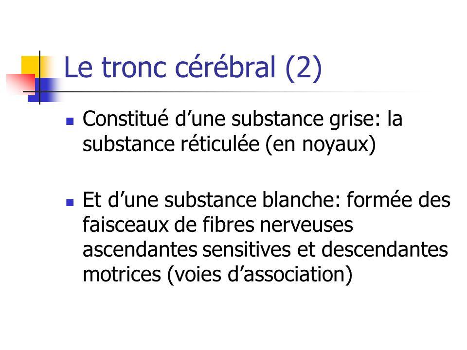 Le tronc cérébral (2) Constitué dune substance grise: la substance réticulée (en noyaux) Et dune substance blanche: formée des faisceaux de fibres nerveuses ascendantes sensitives et descendantes motrices (voies dassociation)