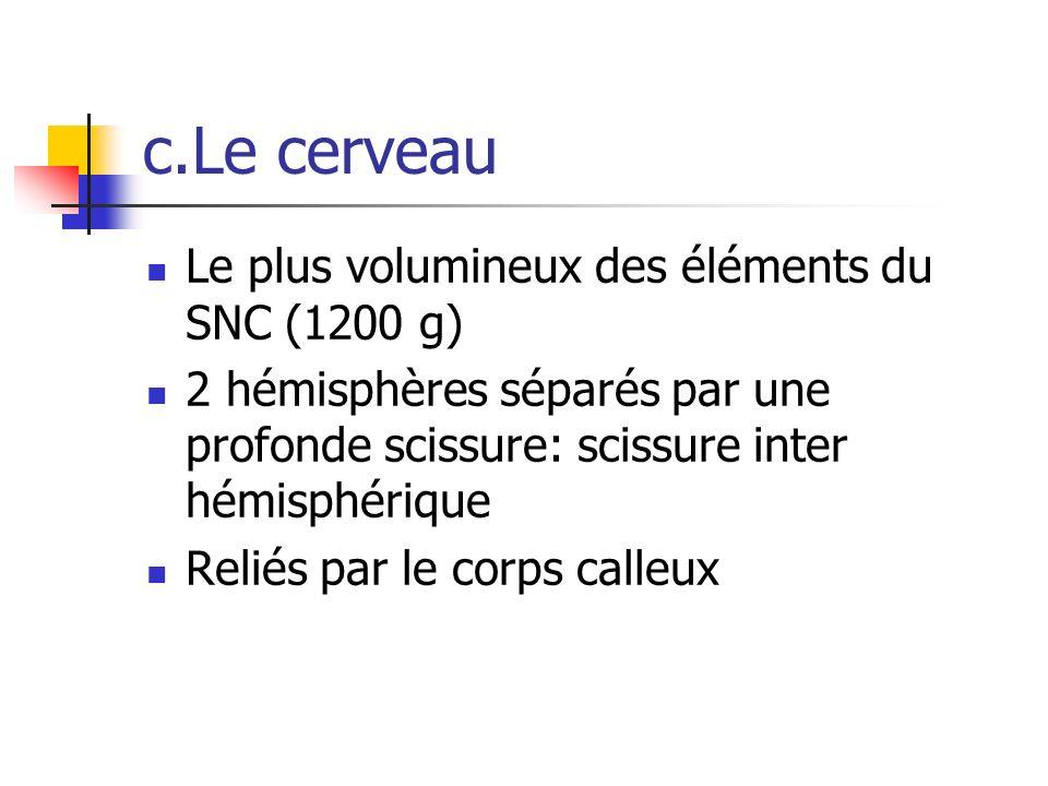 c.Le cerveau Le plus volumineux des éléments du SNC (1200 g) 2 hémisphères séparés par une profonde scissure: scissure inter hémisphérique Reliés par le corps calleux