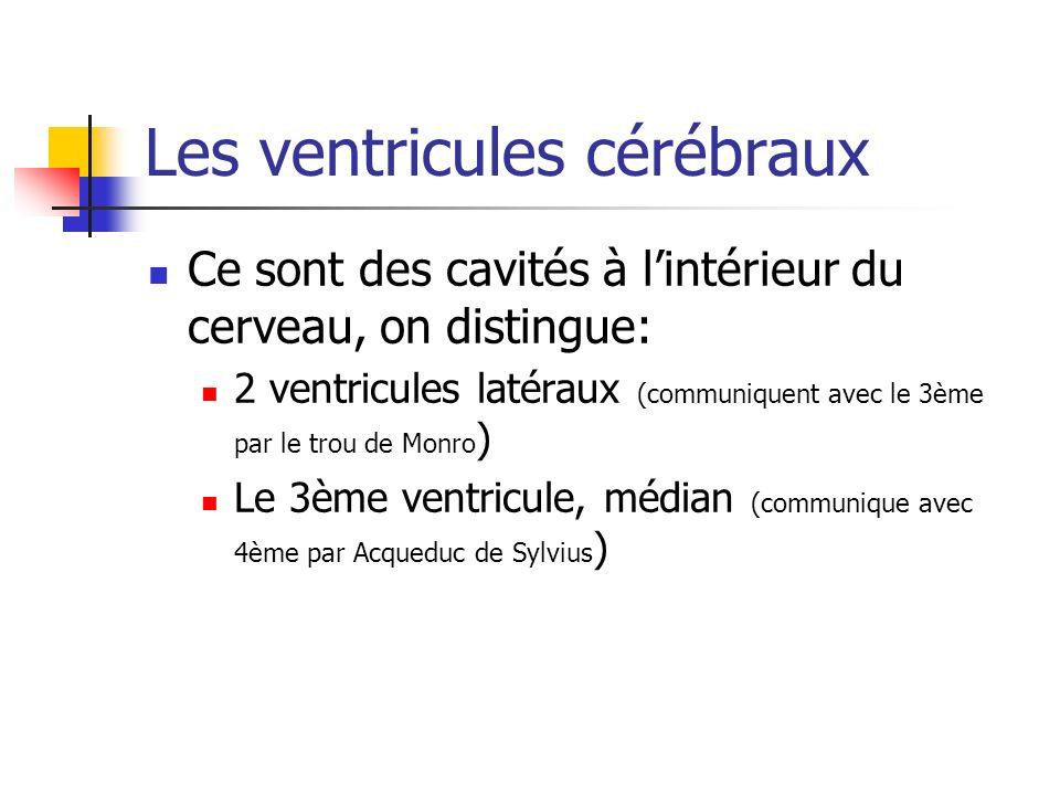 Les ventricules cérébraux Ce sont des cavités à lintérieur du cerveau, on distingue: 2 ventricules latéraux (communiquent avec le 3ème par le trou de Monro ) Le 3ème ventricule, médian (communique avec 4ème par Acqueduc de Sylvius )