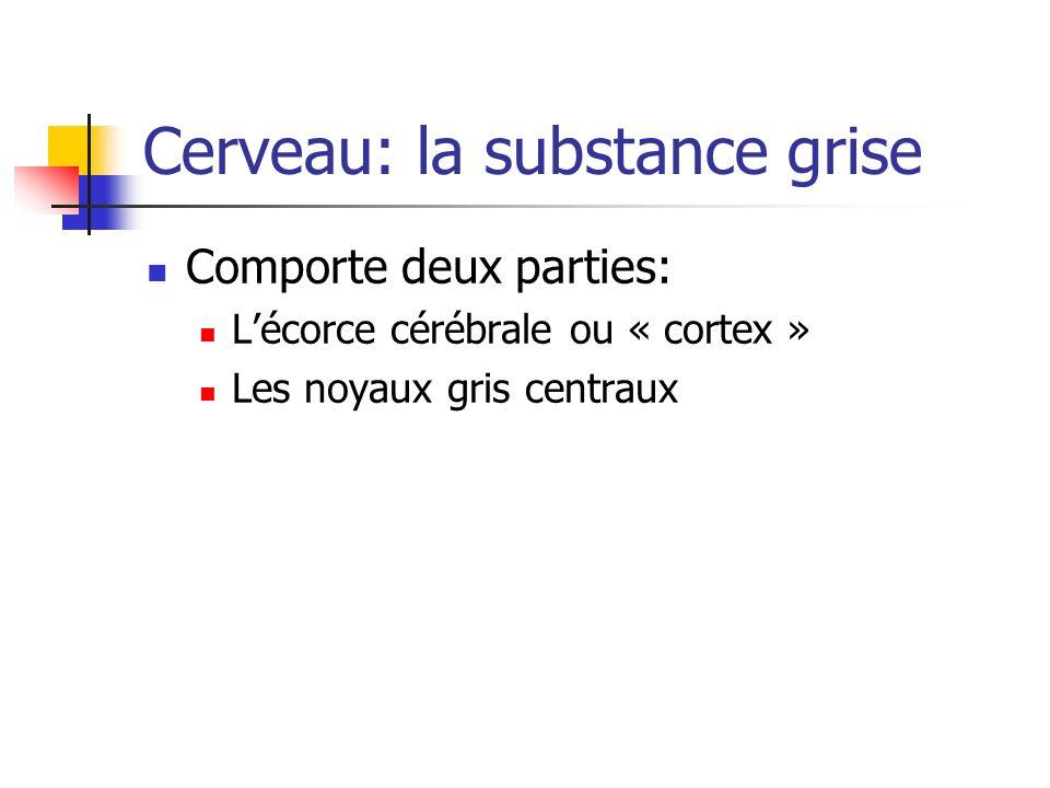 Cerveau: la substance grise Comporte deux parties: Lécorce cérébrale ou « cortex » Les noyaux gris centraux