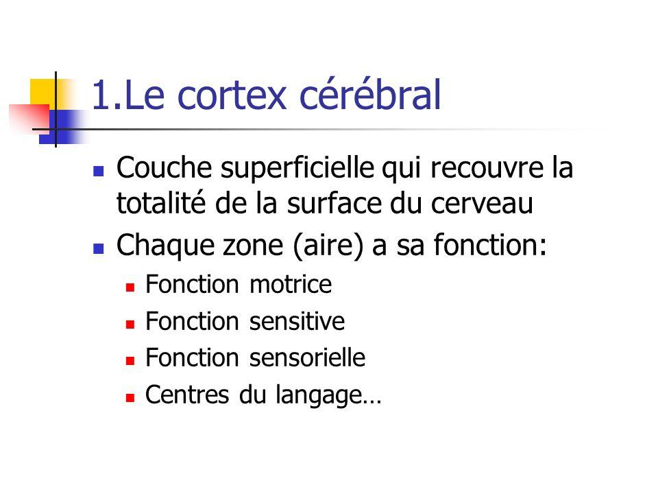 1.Le cortex cérébral Couche superficielle qui recouvre la totalité de la surface du cerveau Chaque zone (aire) a sa fonction: Fonction motrice Fonction sensitive Fonction sensorielle Centres du langage…
