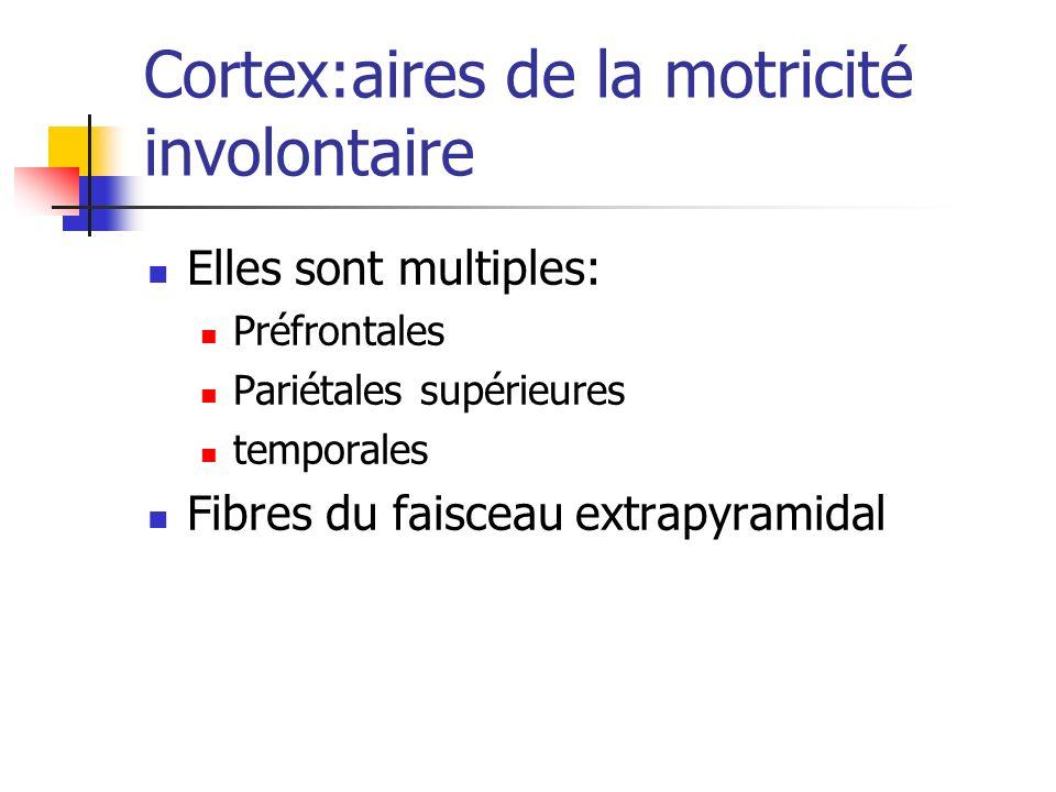 Cortex:aires de la motricité involontaire Elles sont multiples: Préfrontales Pariétales supérieures temporales Fibres du faisceau extrapyramidal