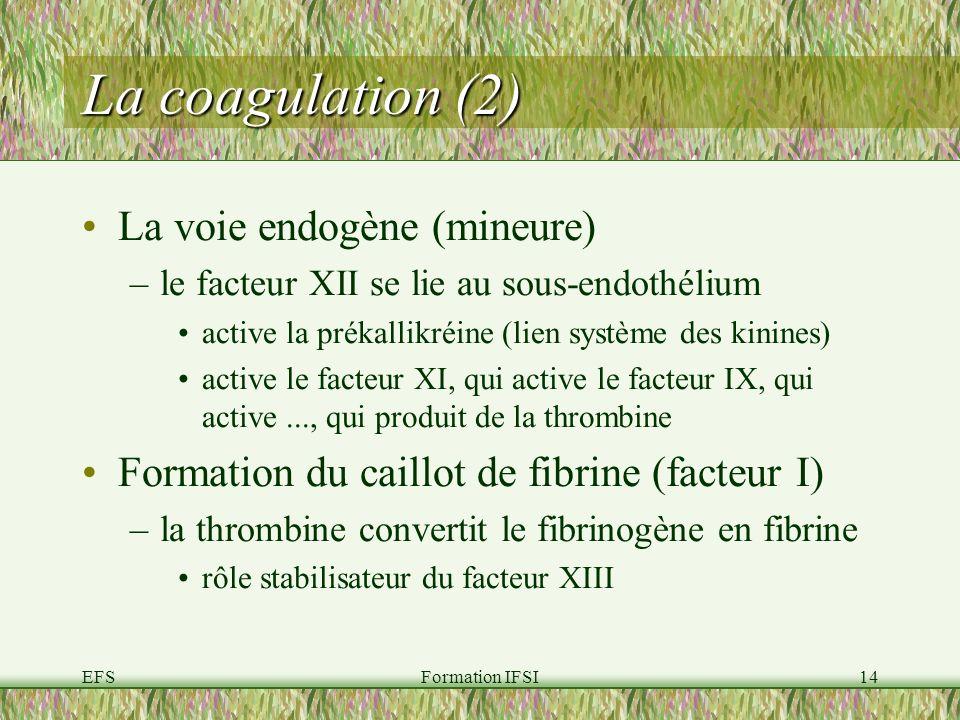 EFSFormation IFSI14 La coagulation (2) La voie endogène (mineure) –le facteur XII se lie au sous-endothélium active la prékallikréine (lien système des kinines) active le facteur XI, qui active le facteur IX, qui active..., qui produit de la thrombine Formation du caillot de fibrine (facteur I) –la thrombine convertit le fibrinogène en fibrine rôle stabilisateur du facteur XIII