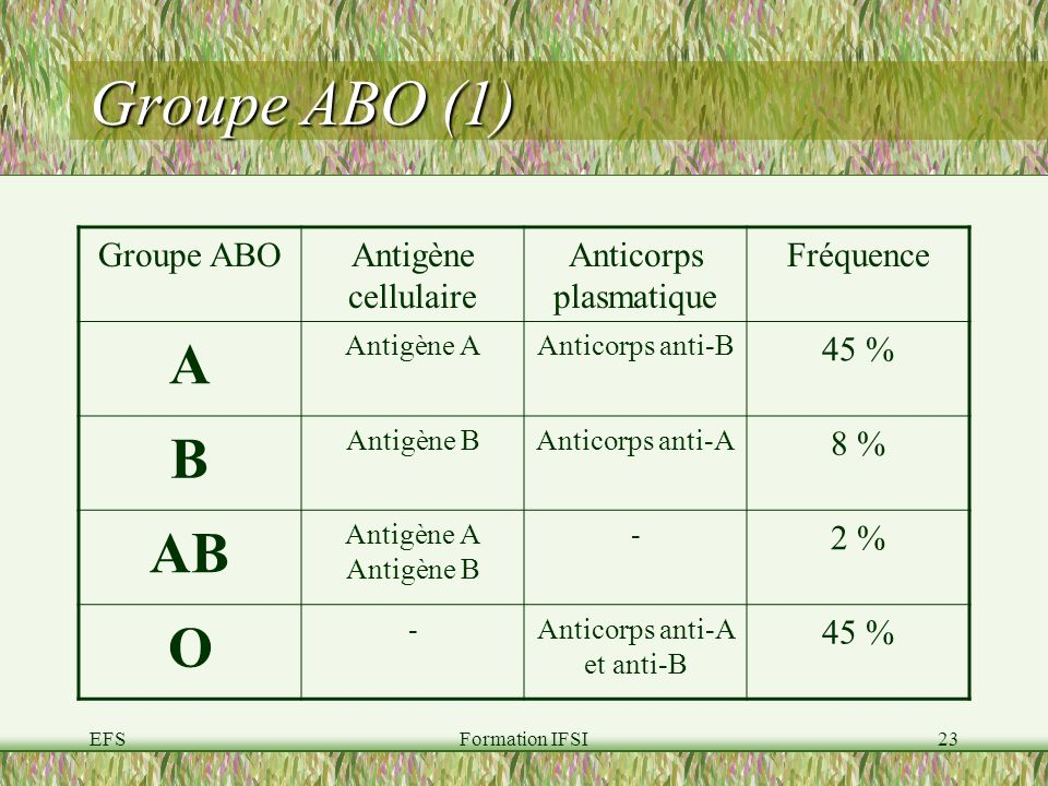 EFSFormation IFSI23 Groupe ABO (1) Groupe ABOAntigène cellulaire Anticorps plasmatique Fréquence A Antigène AAnticorps anti-B 45 % B Antigène BAnticorps anti-A 8 % AB Antigène A Antigène B - 2 % O -Anticorps anti-A et anti-B 45 %