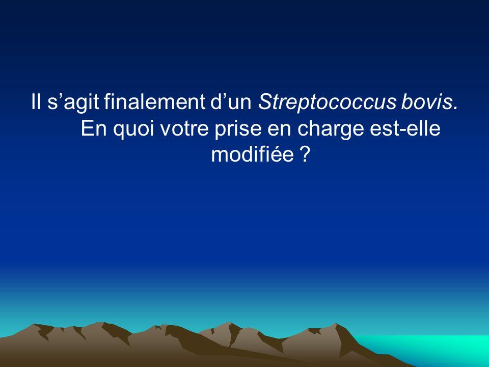 Il sagit finalement dun Streptococcus bovis. En quoi votre prise en charge est-elle modifiée ?
