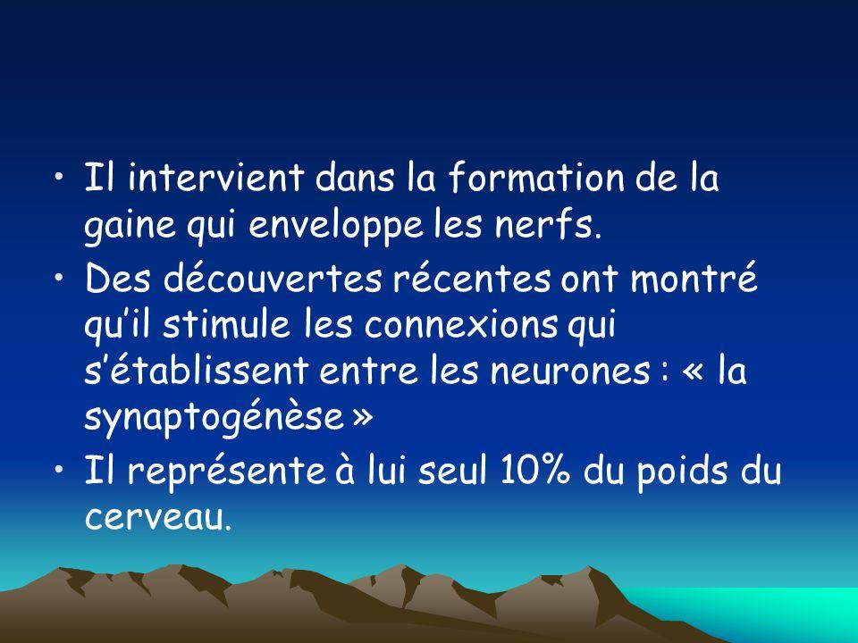 Il intervient dans la formation de la gaine qui enveloppe les nerfs. Des découvertes récentes ont montré quil stimule les connexions qui sétablissent