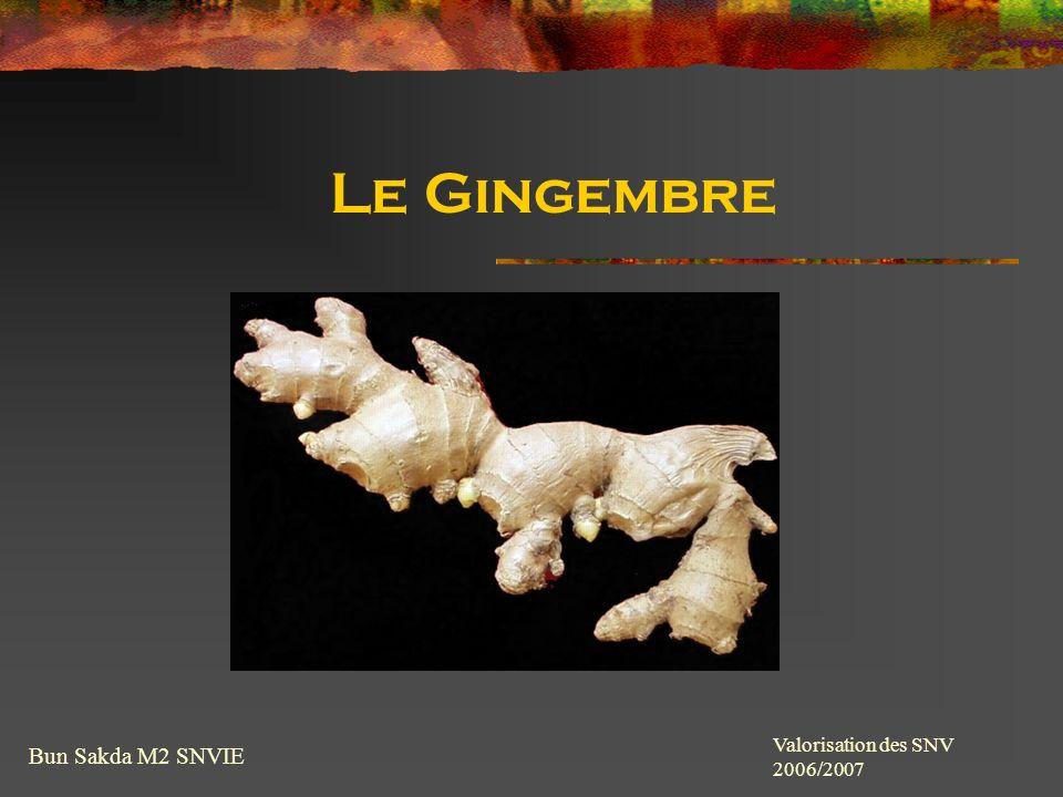 Le Gingembre Bun Sakda M2 SNVIE Valorisation des SNV 2006/2007