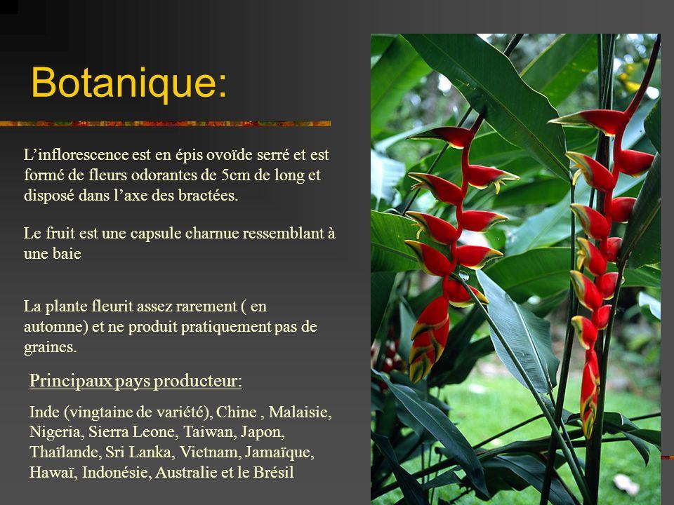 Botanique: Linflorescence est en épis ovoïde serré et est formé de fleurs odorantes de 5cm de long et disposé dans laxe des bractées. Le fruit est une