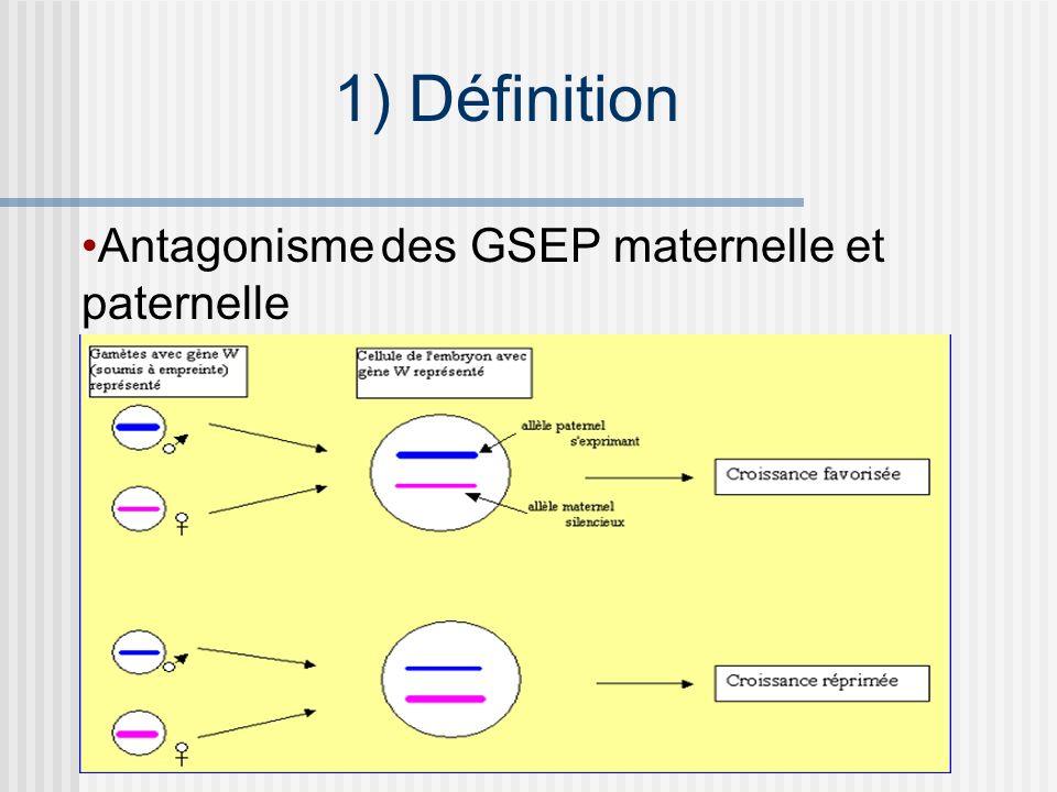 Antagonisme des GSEP maternelle et paternelle 1) Définition