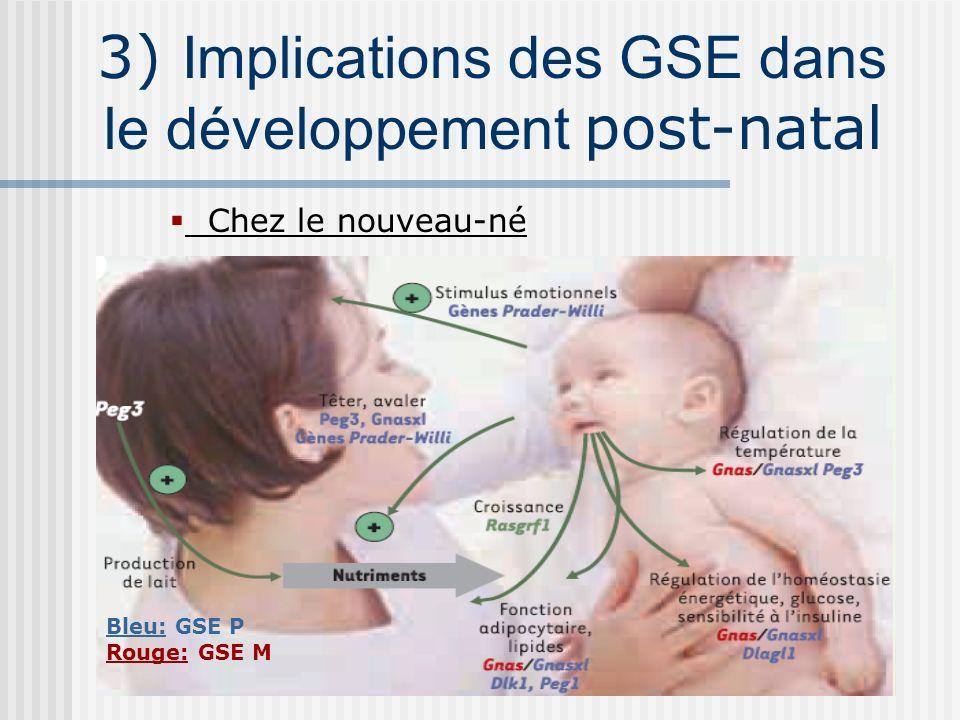 3) Implications des GSE dans le développement post-natal Chez le nouveau-né Bleu: GSE P Rouge: GSE M