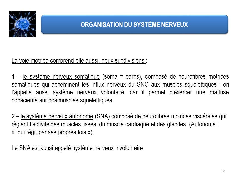 12 ORGANISATION DU SYSTÈME NERVEUX La voie motrice comprend elle aussi, deux subdivisions : 1 – le système nerveux somatique (sôma = corps), composé d
