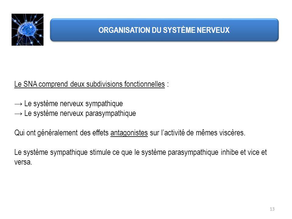 13 ORGANISATION DU SYSTÈME NERVEUX Le SNA comprend deux subdivisions fonctionnelles : Le système nerveux sympathique Le système nerveux parasympathiqu