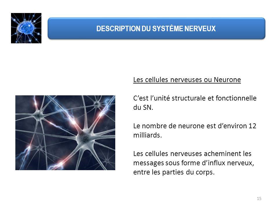 15 DESCRIPTION DU SYSTÈME NERVEUX Les cellules nerveuses ou Neurone Cest lunité structurale et fonctionnelle du SN. Le nombre de neurone est denviron