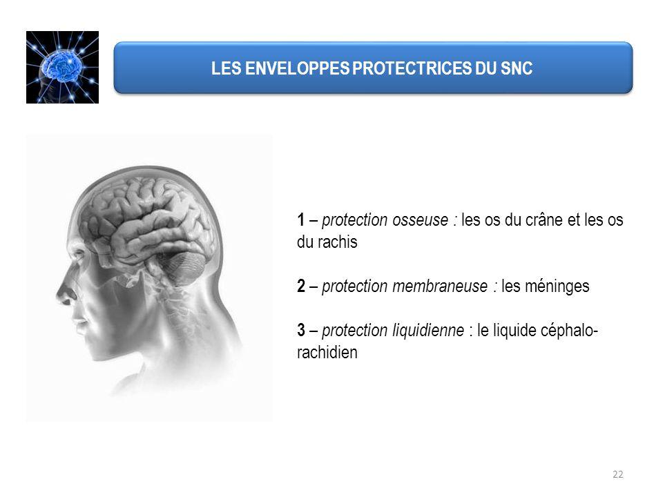 22 LES ENVELOPPES PROTECTRICES DU SNC 1 – protection osseuse : les os du crâne et les os du rachis 2 – protection membraneuse : les méninges 3 – prote
