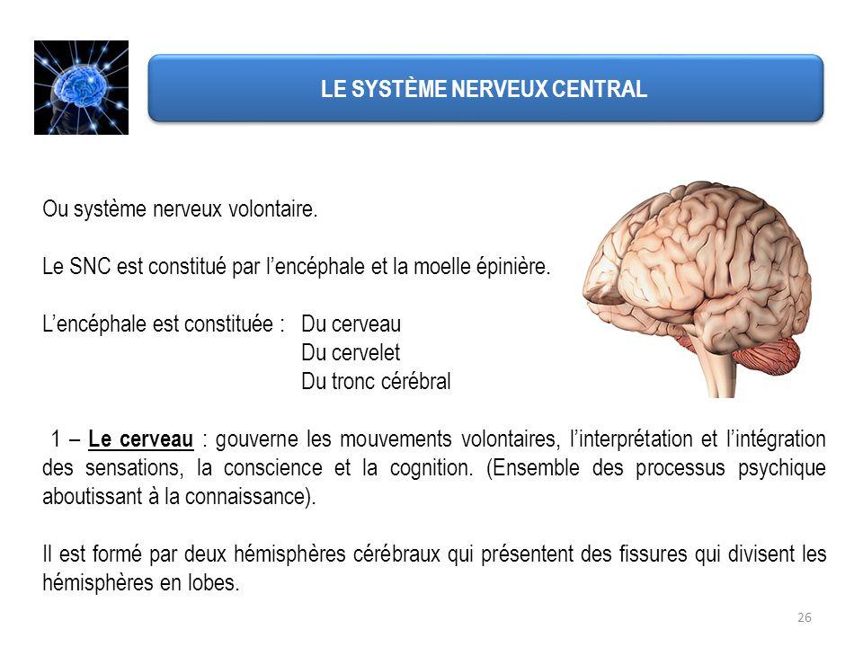 Ou système nerveux volontaire. Le SNC est constitué par lencéphale et la moelle épinière. Lencéphale est constituée : Du cerveau Du cervelet Du tronc