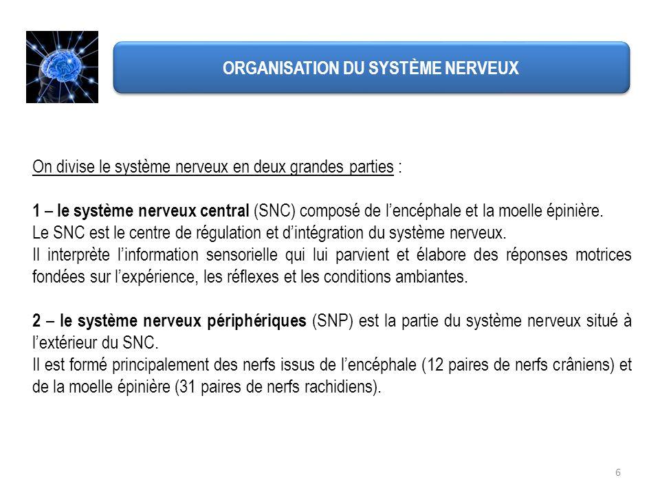 6 ORGANISATION DU SYSTÈME NERVEUX On divise le système nerveux en deux grandes parties : 1 – le système nerveux central (SNC) composé de lencéphale et