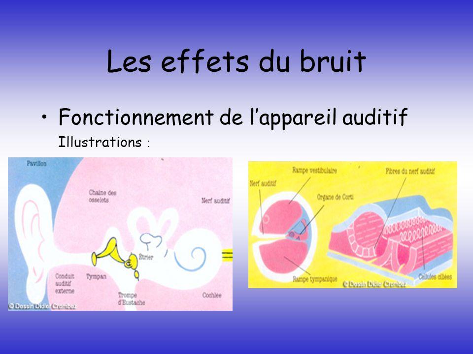 Les effets du bruit Effets sur le travail Effets sur laudition -Traumatisme acoustique - La fatigue auditive - La surdité professionnelle
