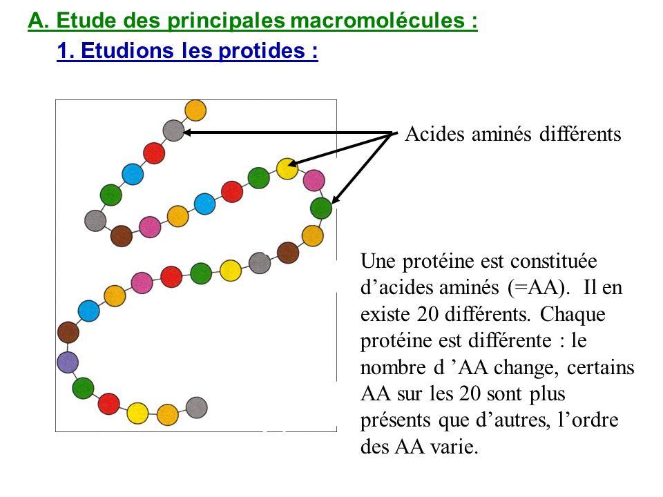 A. Etude des principales macromolécules : 1. Etudions les protides : Une protéine est constituée dacides aminés (=AA). Il en existe 20 différents. Cha